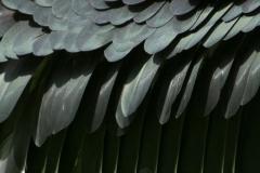 blijdorp-08609