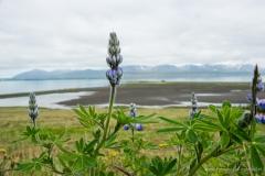 ijsland-01823
