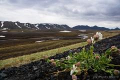 ijsland-02910