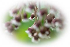 bloem-09134