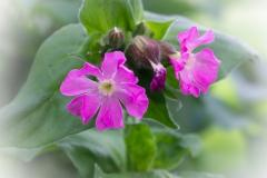 bloem-09376