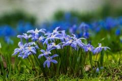 bloemen-04502